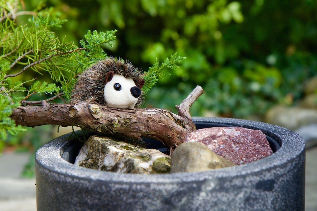 Bonsai and hedgehog