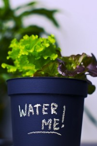 Do not forget to water plants regularly.