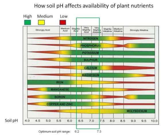 pH affects the availability of many resources in soil, so watch out for it!