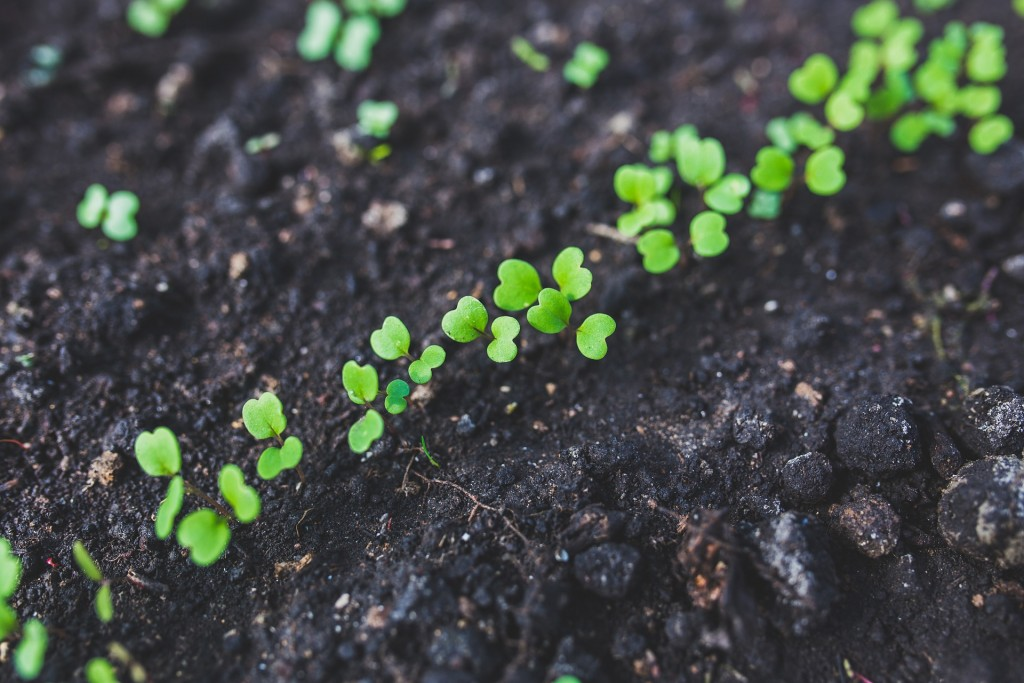 Germination is the first step in a plants life