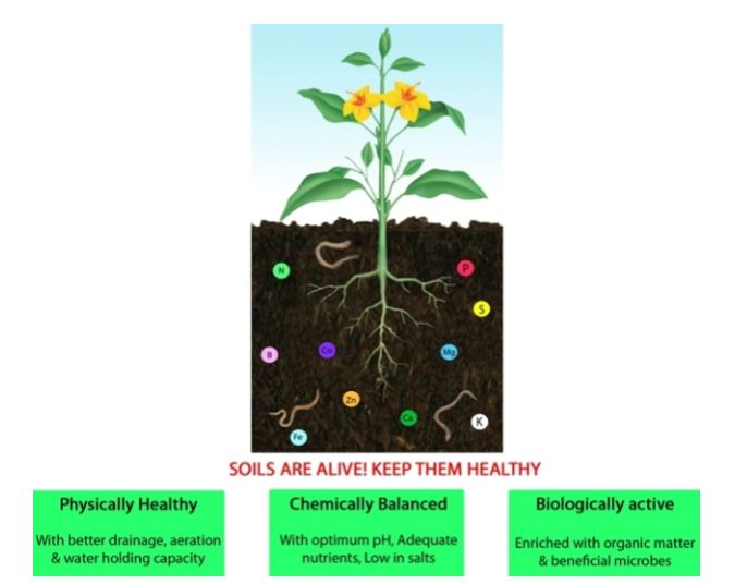 Soils are alive, keep them healthy if you want your plants to thrive.