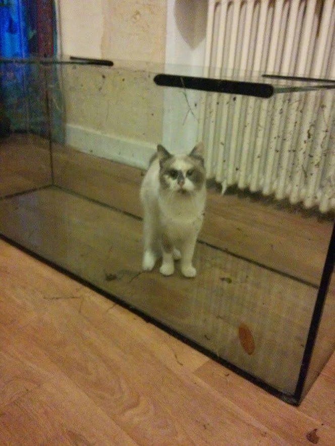 Here a picture of our cat in an aquarium