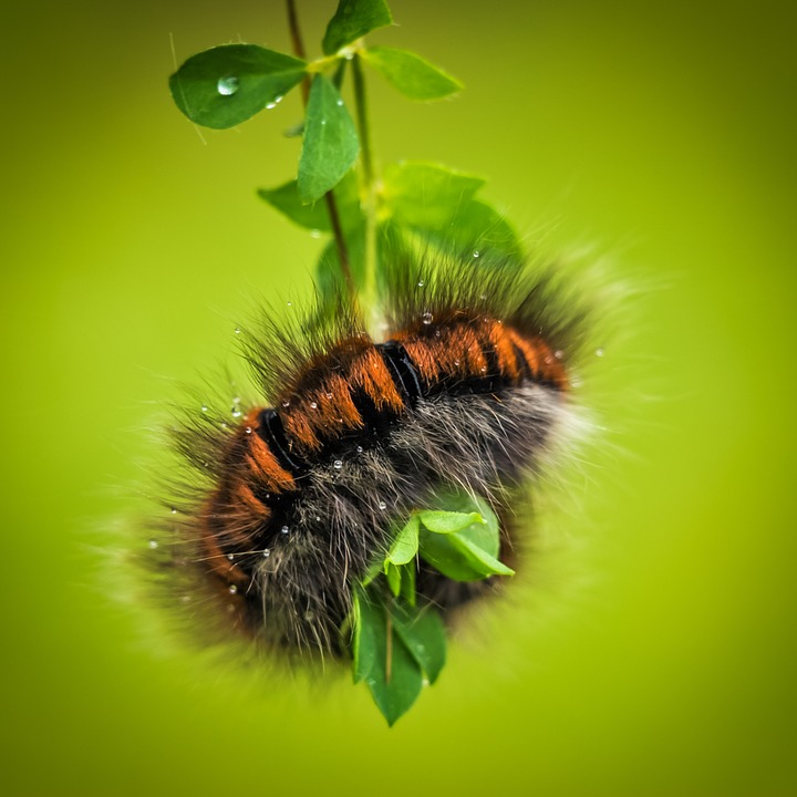 You can find all types of caterpillars chewing on your plants, though each one usually has its preferences.