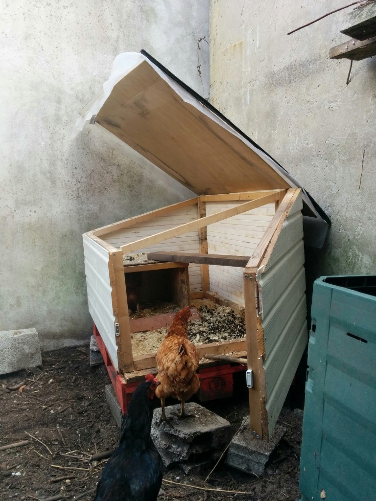 The cickens love their new coop.