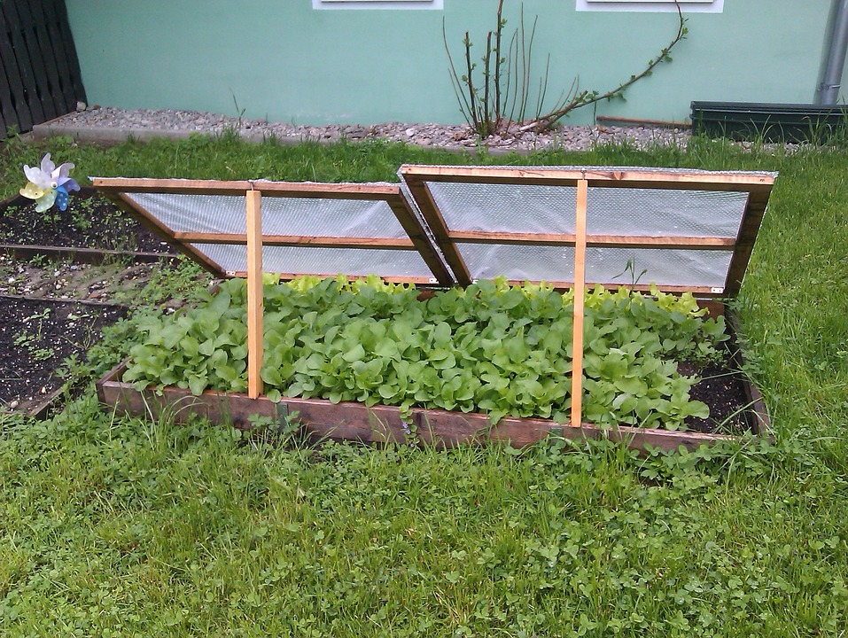 Cold frames and hot beds are great if you want to start growing your vegetables earlier in the season!
