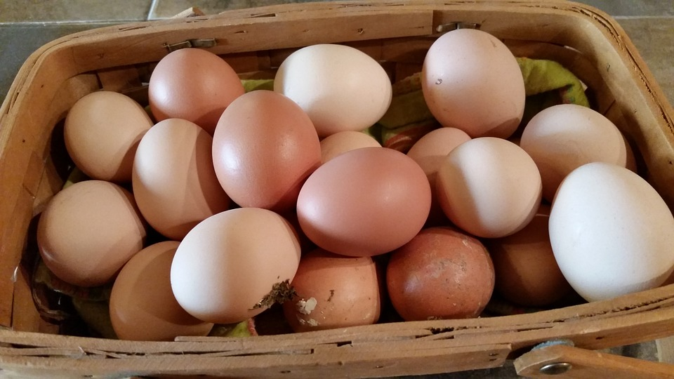 Getting fresh eggs everyday is pretty awesome.