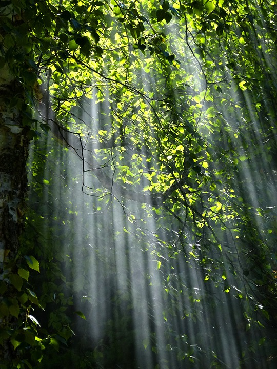 Light is vital to all living beings