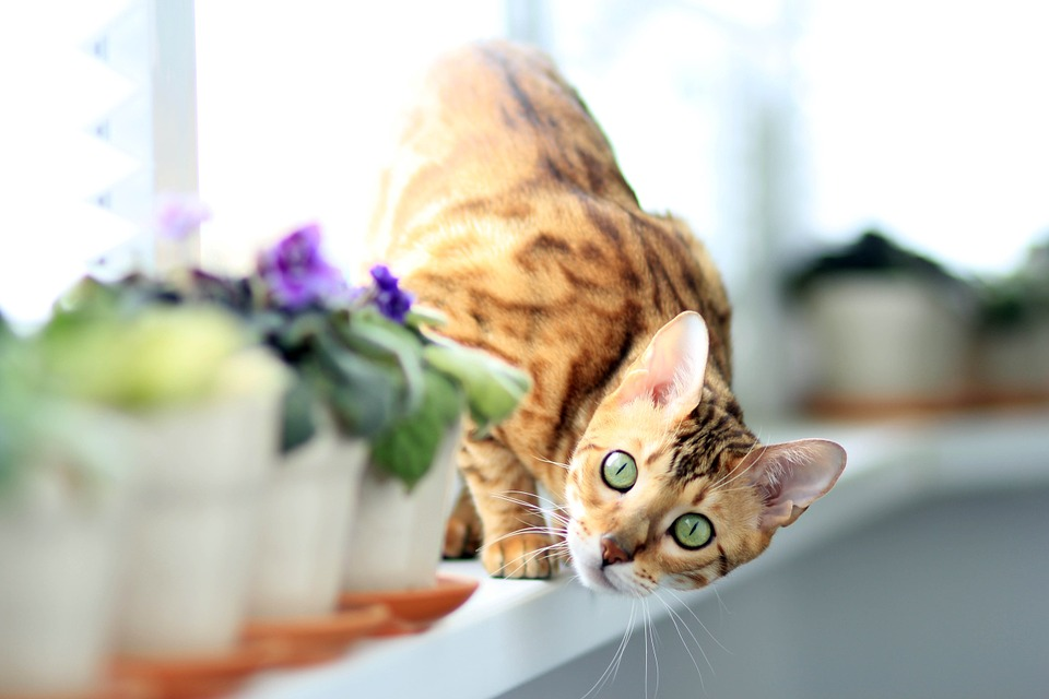 Unfortunately for you plants are not the only living beings which appreciate windowsills.