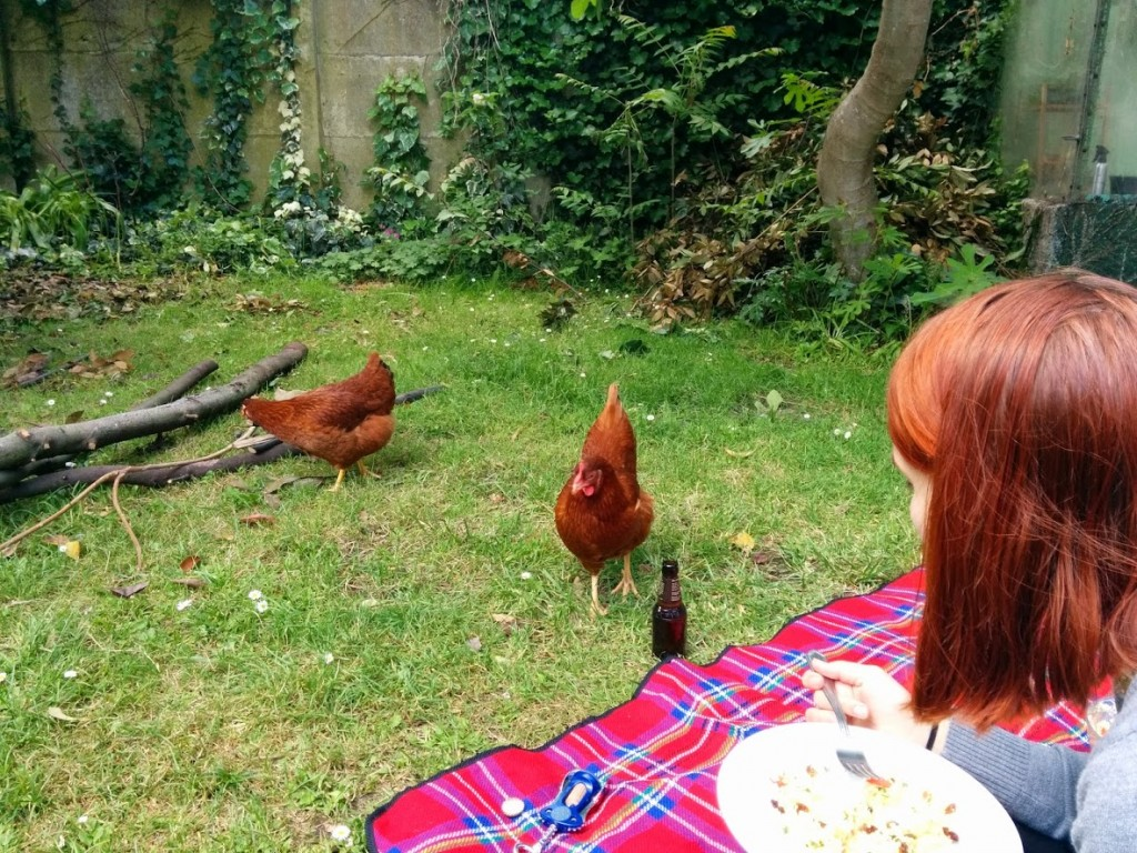 They are also good picnic companions