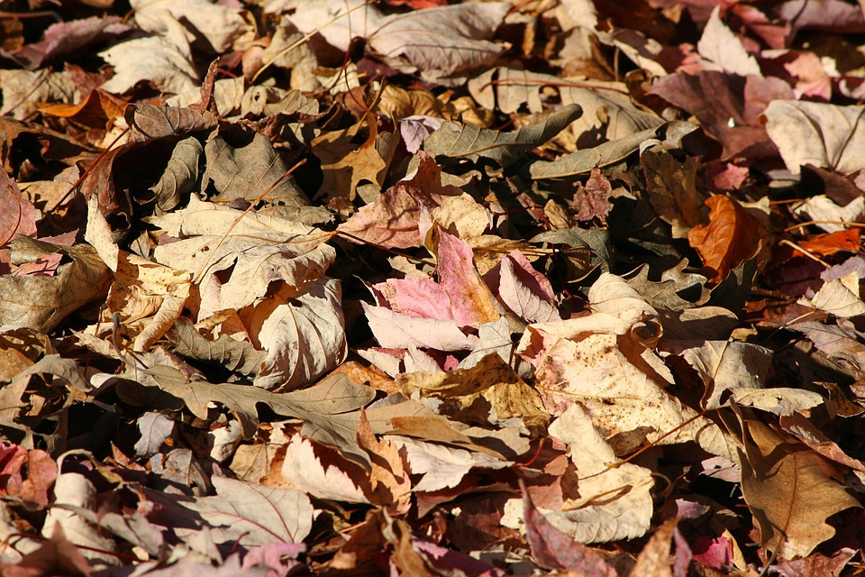 Mulch : dead leaves, wood chips, straw, ... anything will do.